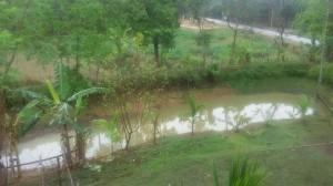 pond = Pukhuri