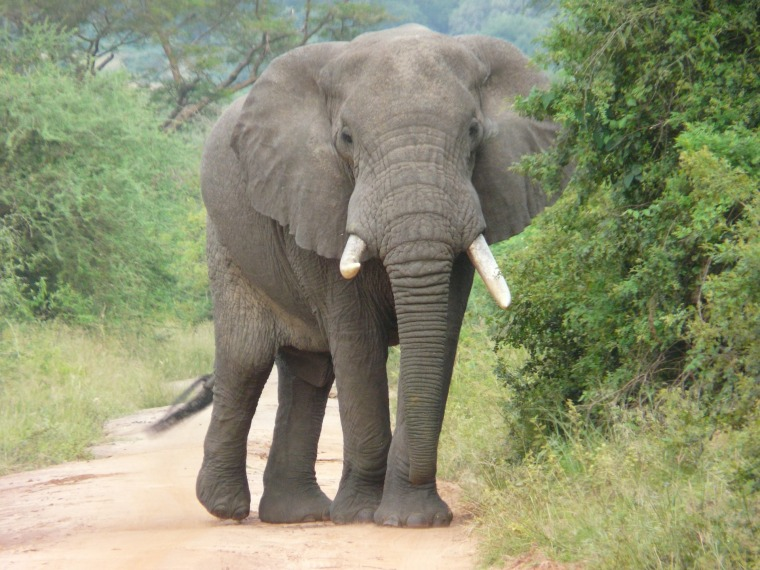 elephant-2064249_1920